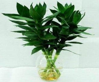 十大适合放在客厅的盆栽花卉