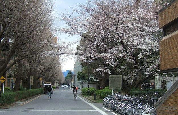 2013年日本各高校大学最新排名