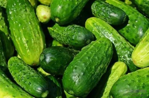 孩子成长发育所需蔬菜排行榜