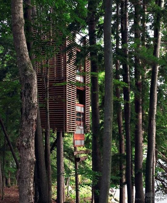 世界十大树屋 看看人家的房子
