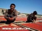 阿勒泰有什么特产?新疆阿勒泰特产排行榜